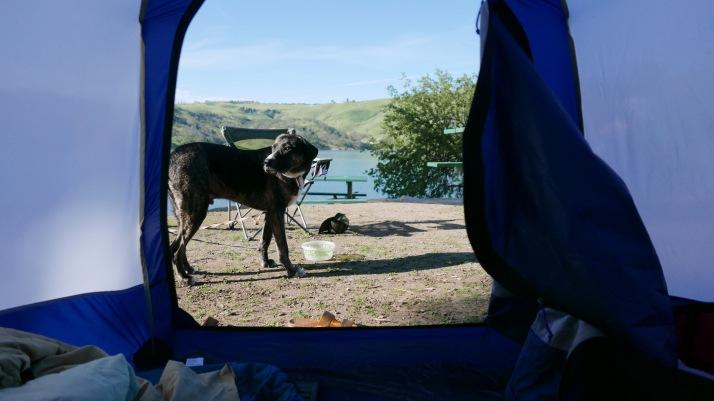 Lake Nacimiento - Tent